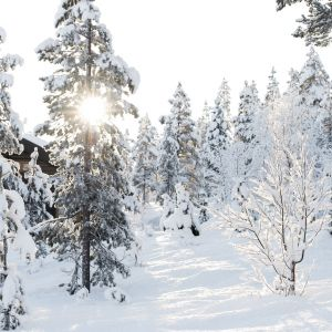 winter_sun_norway